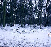 Carpet of Snow by Trevor Kersley