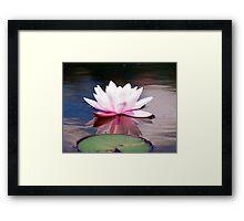 Lily & Pad Framed Print