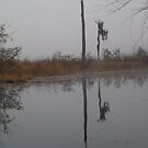 fog,Econfina Creek,wasp tree,cypress,swamp by May Lattanzio