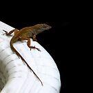 Anole Lizard by AuntDot