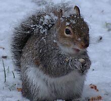 A Squirrel by Sharon Perrett