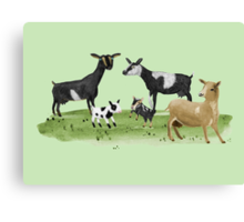 Dairy Goats Canvas Print