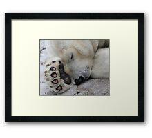 Sleepy Polar Framed Print