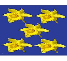 DAFFODILS ON BLUE Photographic Print