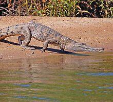 Cranky Croc, Geike Gorge, Western Australia by Adrian Paul