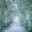 Mystic  path in a tree alley by artshop77