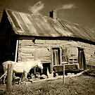 Old House and Horse by georgiaart1974