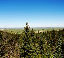 Cypress lookout by Heath Dreger