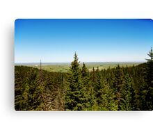 Cypress lookout Canvas Print