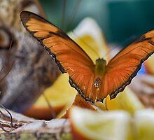 Flight by Robin Johnston