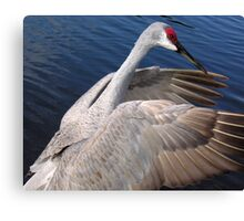 Beautiful Sandhill Canvas Print