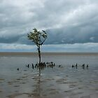 Grey day at Toogoom beach by Wilparina