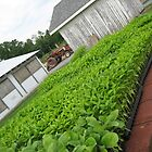 Planting Season by M-EK