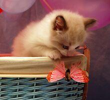 Look the butterfly!!! by Patricia F. de Landa