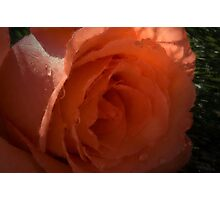 Peach beauty Photographic Print