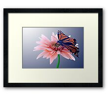 Monarch Framed Print