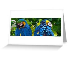 Two Old Birds Greeting Card
