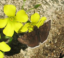 Itty Bitty Butterfly by jsmusic