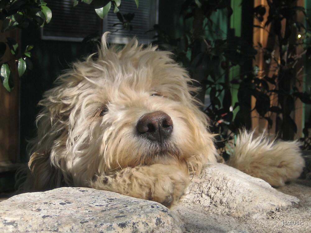 Shaggy Dog by jsmusic