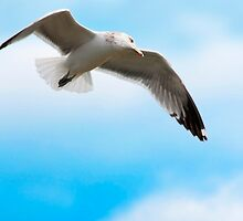 Birds eye view by Eyal Nahmias