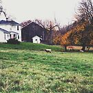 sheep farm by beverlylefevre