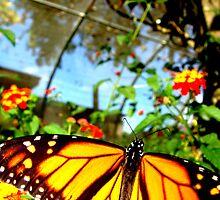Monarch by Emily Higginbotham