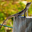 Bearded Dragon on a Fence post by robinof