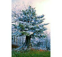 FIR TREE, CLINGMANS DOME* Photographic Print