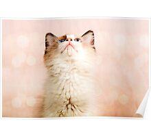 A Kittens Prayer Poster