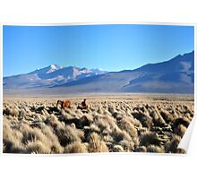 Grazing on volcanic plains Poster
