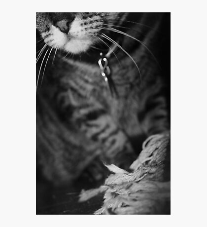 Wiskers & Threads Photographic Print