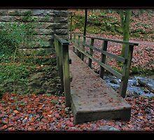 Plymbridge Woods...... by sasraku