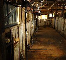 Shearing Shed 2 by dawesy