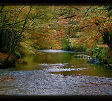 Plymbridge Woods by sasraku