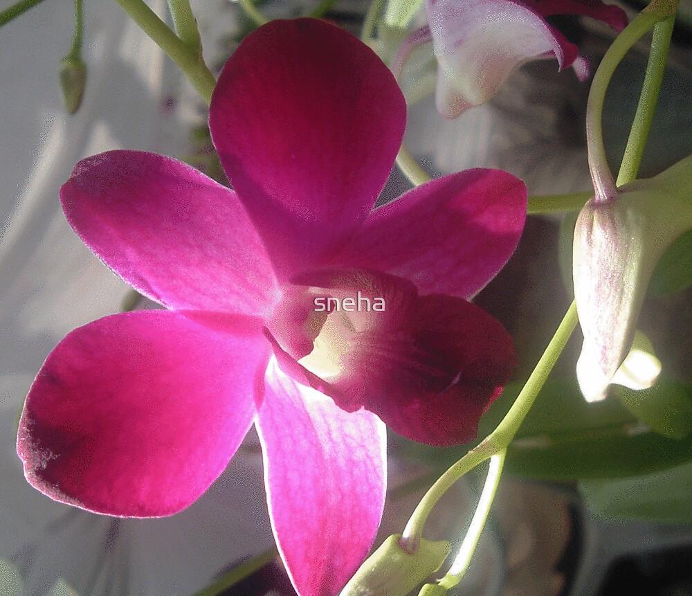 glowing orchid by sneha