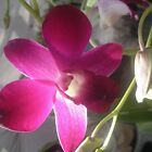 glowing orchid by sneha