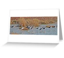 Black winged Stilts, Derby, Western Australia Greeting Card