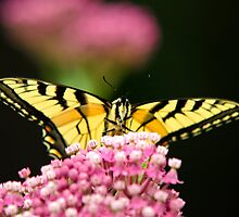 Flowers and Butterfly Art by Christina Rollo