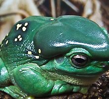 GREEN TREE FROG by Karen Stackpole