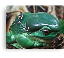 GREEN TREE FROG - Queensland Canvas Print
