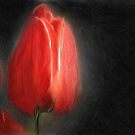 Wayne Everett Tulip by Susan Schulz