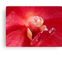 Orchid Macro Canvas Print