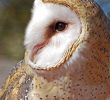 Side Portrait Barn Owl  by Judy Grant