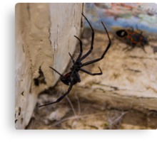 Hello, Mr. Spider Canvas Print