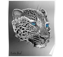Leopard-Old-Blue-Eyes-Justin-Beck-Picture-2015098 Poster