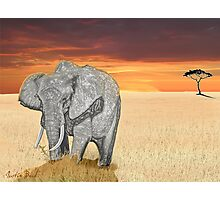Savana Elephant Justin Beck Picture 2015085 Photographic Print