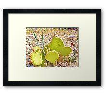 Flat cactus Framed Print