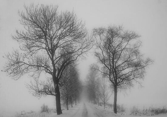 Foggy lane by Veikko  Suikkanen