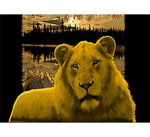 Yellow lion Justin Beck Picture 2015090 Photographic Print