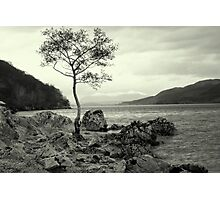 Tree with a View Photographic Print